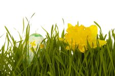 Free Easter Egg And Daffodil Royalty Free Stock Photo - 4380305