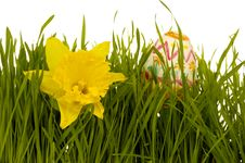 Free Daffodil And Easter Egg Royalty Free Stock Photo - 4380365