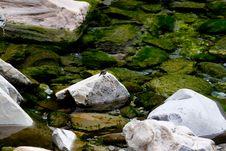 Free Stone,water And Bird Stock Photo - 4380390