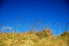 Free Beach Grass Royalty Free Stock Photography - 4380767