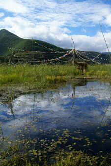 Free Buddha Banners In Lugu Lake Marsh Stock Photography - 4381422