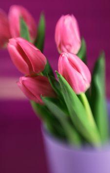 Free Tulips Royalty Free Stock Image - 4382196