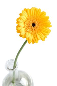 Free Yellow Daisy In Vase Stock Photo - 4382270