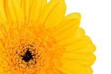 Free Yellow Daisy Royalty Free Stock Images - 4382449