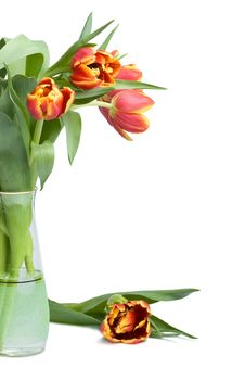 Free Red Tulips In Vase Royalty Free Stock Photos - 4382518
