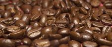 Free Coffee Beans Stock Images - 4383214