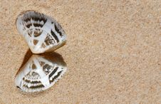 Free Shell On The Sand Royalty Free Stock Photography - 4383397