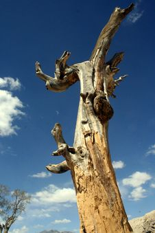 Dry Rot Tree Stock Photos