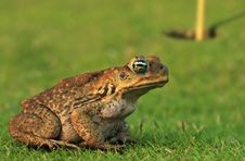 Free Toad In A Hole Royalty Free Stock Photography - 4388847