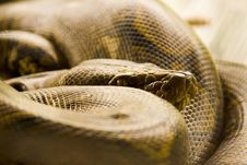 Free Coiled Snake Stock Photo - 4388910