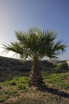 Free Palmtree In The Fields Of Portugal Stock Image - 4391021