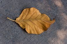 Leaf On Ground Royalty Free Stock Images