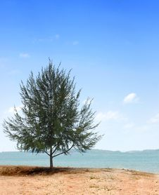 Free Single Tree Royalty Free Stock Image - 4391826