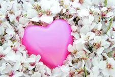 Pink Heart In A Bed Of Flowers