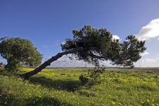 Free Typical Alentejo Landscape In Portugal Royalty Free Stock Photo - 4391955