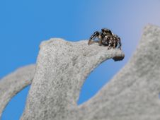 Free Spider On Mount Everest Royalty Free Stock Photos - 4392918