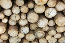 Free Wood Piles Royalty Free Stock Photography - 4393157