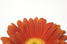 Free Half Of Red Flower Royalty Free Stock Photography - 4393167