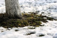 Growing Grass And Thawing Snow Stock Photography