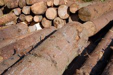 Free Wood Piles Stock Photo - 4393210