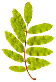 Free Autumn Leaf Stock Image - 4393271