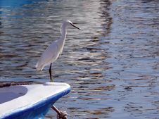 Free Heron Royalty Free Stock Photography - 4393657