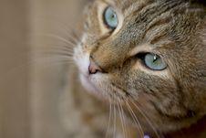 Free Cat Face Stock Photos - 4395203