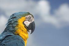 Free Parrot Profile Royalty Free Stock Photos - 4395338