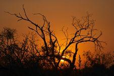 Free Sunset In The Bushveld 1 Stock Image - 4397461