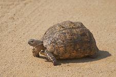A Leopard Tortoise Stock Photos