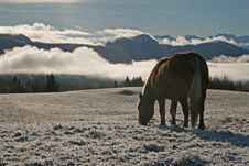 Free Horses In Snow Royalty Free Stock Image - 4399166