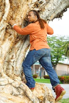 Free Man Climbing A Tree Royalty Free Stock Photography - 4399837