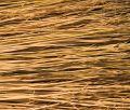 Free Broom Bristles Royalty Free Stock Image - 440686