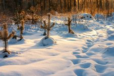 Free Sunset In The Winter Forest Stock Photography - 440802