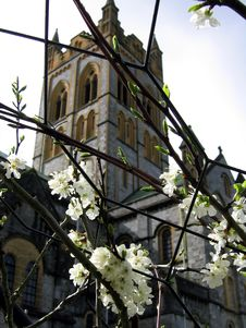 Free White Flowers At Buckfast Abbey Stock Photo - 442470