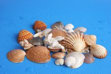 Free Shells Royalty Free Stock Image - 443156