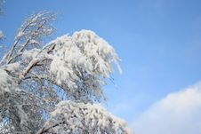 Free White Snow And Blue Sky Stock Images - 444454