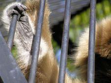 Free Monkey S Leg Stock Image - 444821