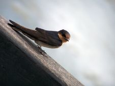 Free Beautiful Bird Royalty Free Stock Photography - 447067