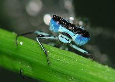 Free Dragonfly With Blue Eyes Royalty Free Stock Image - 447796