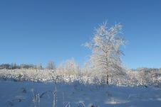 Free Winter Scene Stock Photography - 448152
