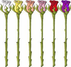 Free Long Stem Roses Stock Photos - 448703