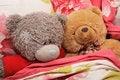Free Bear S Family Stock Photo - 4402370