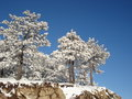 Free Idilic Snow Covered Pine Trees Stock Images - 4408444