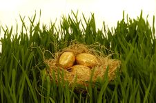 Free Easter Eggs In Nest Royalty Free Stock Image - 4400466