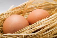 Free Eggs Stock Photo - 4401660