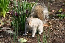 Free Squirrel And Flowers Stock Photography - 4401882