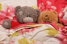 Free Bear S Family Stock Photography - 4402252