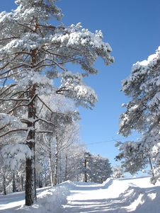 Winter Idila Royalty Free Stock Images