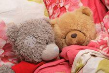 Free Bear S Family Royalty Free Stock Photo - 4402385